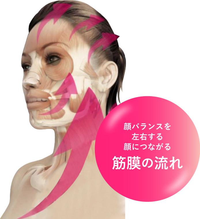 顔バランスを左右する顔につながる 筋膜の流れ